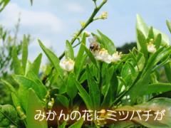 IMG_8191_1