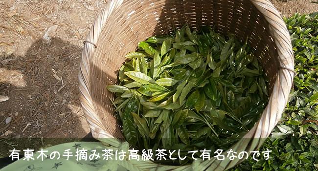 有東木の手摘み茶は高級茶として有名なのです