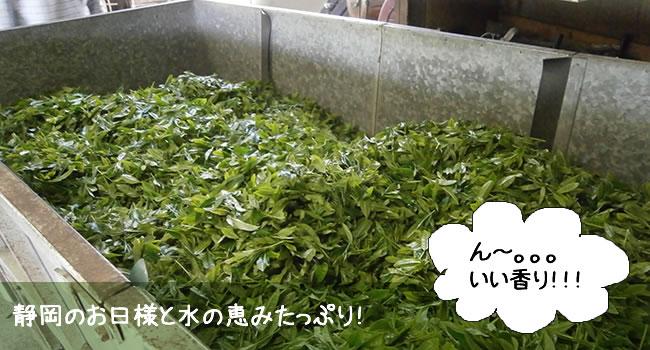 静岡のお日様と水の恵みたっぷり!