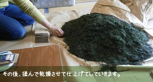 その後、揉んで乾燥させて仕上げてしていきます。